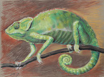 Chmäleon 7, Pastel auf Papier, 28 x 39 cm