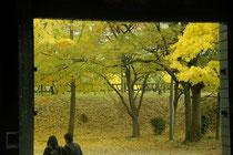 「晩秋の大阪城」(中野治朗)