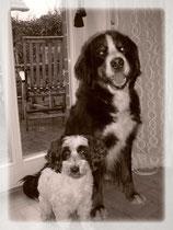 !!!!! Die Besten Hunde der Welt !!!!!