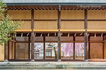護国神社の桜(富山市)