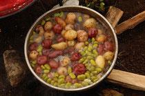 Ein köstliches Mittagessen für die Bauern auf den Kartoffelfeldern - direkt auf dem Feld zubereitet / Kartoffeln - Peru