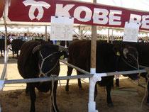 神戸の牛コンテスト