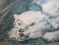 Медведь и бальная маска