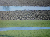 """""""Naturstreifen""""     Foto bearb., auf Leinwand,   2x   35 x 110"""