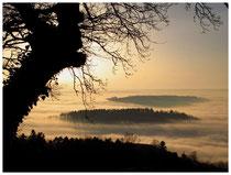 Hegau im Nebel 6203