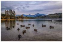 6792 Wasservögel auf dem Weißensee