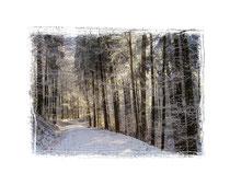 Waldweg 0003
