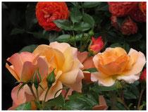 Rose 9845