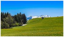 4104 Frühlingswiese im Allgäu