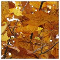 Herbstlaub 2867