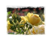 Rose 7512