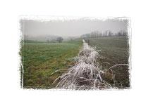 Winterlandschaft mit Raureif 2043