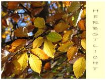 Herbstlaub 3656a