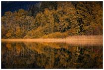 1137 Herbststimmung am Bannwaldsee