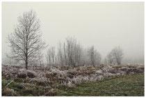 Winterlandschaft im Hegau 2087