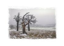Winterlandschaft im Hegau 2544