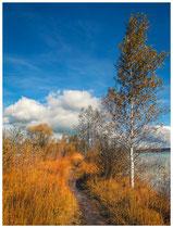 6551 Uferweg am Oberen Lechsee bei Lechbruck