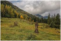 Landschaft im Tannheimer Tal - Tirol 0956