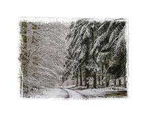 Winterwald 0714