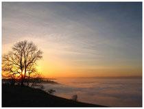 Hegau im Nebel 6233