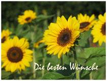 Sonnenblume 1577