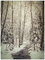 Winterwald 7746