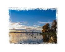 Bodensee bei Allensbach 9477