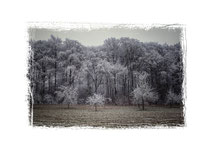 Winterlandschaft im Hegau 2193