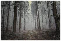 Wald bei Nebel und Raureif 2119