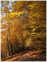 Herbstlicher Waldweg 6948