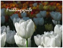 Tulpen 2057