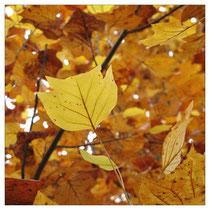 Herbstlaub 2861