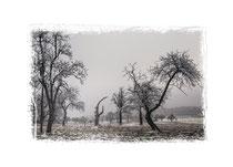 Winterlandschaft im Hegau 2540
