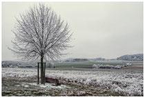 Winterlandschaft im Hegau 2214