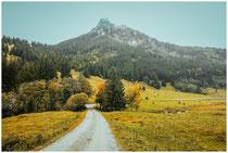 Landschaft im Tannheimer Tal - Tirol 0962