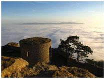 Hegau im Nebel 6169