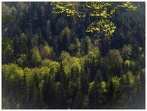 8584 Wald mit Frühlingsfarben