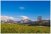 3905 Frühlingswiese mit Alpen