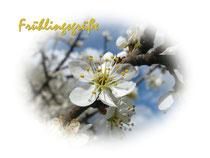 Schlehenblüte 1746a