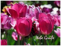 Tulpen 8811