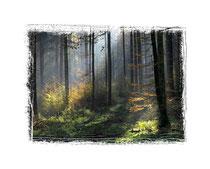 Herbstwald 9318