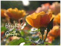 Rose 0397