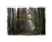Herbstwald 9335