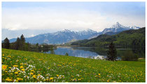 8487 Weißensee mit Blick auf Füssen