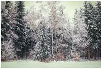 Winterwald 7750