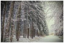 Winterwald im Hegau 7740