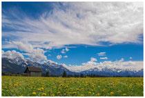4236 Frühlingswiese mit Alpen