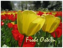 Tulpen 4105