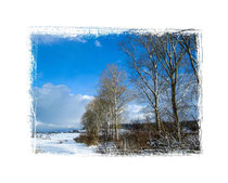 Pappeln im Winter 0003a