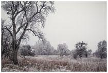 Winterlandschaft bei Stockach 2444
